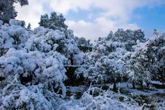 在雪以后的冬天风景 免版税库存图片