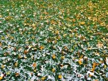 在雪以后的草 库存照片