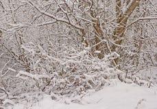 在雪1的树 冬日场面 免版税库存图片