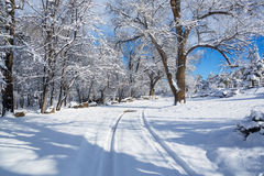 在雪02的轮胎轨道 库存图片