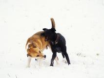 在雪(4)的二条狗 免版税库存照片