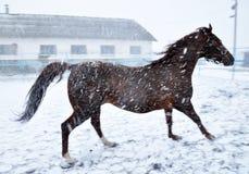 在雪blizzard_7的连续马 免版税库存图片