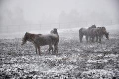 在雪blizzard_7的马 免版税库存图片