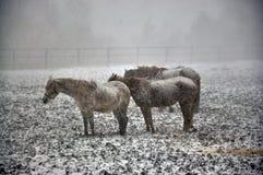 在雪blizzard_9的马 免版税图库摄影