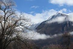 在雪mountain3下的桃子开花 免版税库存照片