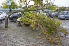 在雹暴以后的残破的树 图库摄影