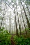 在雾下的树 免版税库存照片