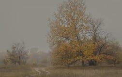 在雾射击的秋天风景 库存照片