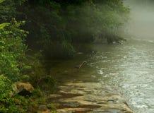 在雾的一个伟大蓝色的苍鹭的巢 库存图片