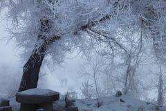 在雾的一棵树 免版税库存照片