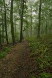 在雾的供徒步旅行的小道 库存照片