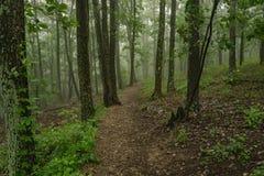 在雾的供徒步旅行的小道 库存图片