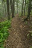 在雾的供徒步旅行的小道 免版税库存图片