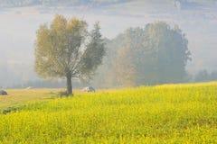 在雾的偏僻的树 免版税库存照片