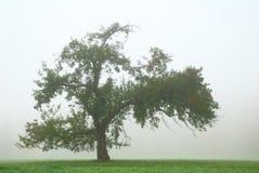 在雾的偏僻的苹果树 免版税库存照片