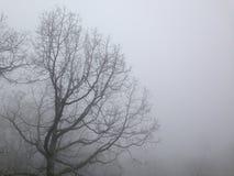 在雾的光秃的树 免版税库存照片