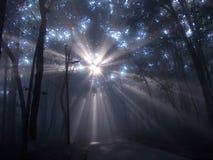 在雾的光芒 免版税库存图片