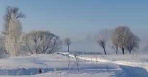 在雾的冬天树 免版税库存图片