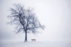 在雾的冬天树 库存照片