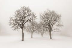 在雾的冬天树 库存图片