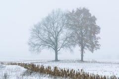 在雾的冬天树 免版税库存照片
