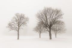 在雾的冬天结构树 库存图片