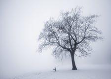 在雾的冬天结构树 免版税库存图片
