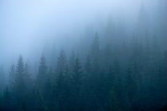 在雾的冷杉木 免版税库存图片