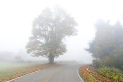 在雾的大叶子槭树 免版税库存图片