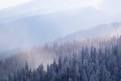 在雾的山小山在冬天 库存图片