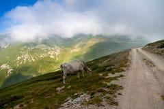 在雾的山 图库摄影