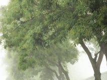 在雾的日本宝塔树 免版税库存图片