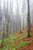 在雾的木头 库存照片