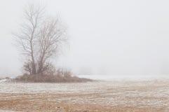 在雾的树在冬天海滩 免版税库存图片