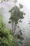 在雾的树在热带雨林 库存图片