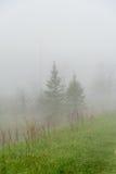在雾的森林道路 免版税库存照片