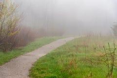 在雾的森林道路 免版税图库摄影