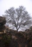 在雾的槭树, Torcal de安特克拉 免版税库存照片