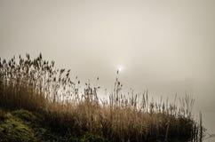 在雾的沼泽 库存照片