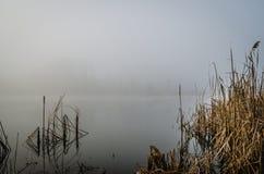 在雾的沼泽 免版税库存图片