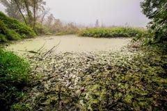 在雾的泥泞的沼泽 库存照片