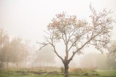 在雾的秋天光秃的树 免版税库存图片