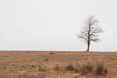 在雾的秋天树 库存照片