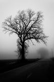 在雾的秋天树 免版税库存照片