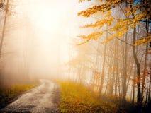 在雾的秋天自然 免版税库存照片