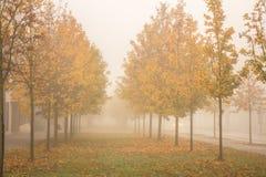 在雾的秋天金黄树 免版税库存照片