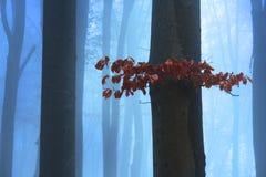 在雾的红色叶子 免版税库存照片