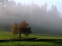 在雾的红色苹果树 库存图片