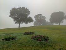在雾的结构树 免版税图库摄影