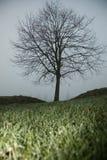 在雾的结构树 库存图片